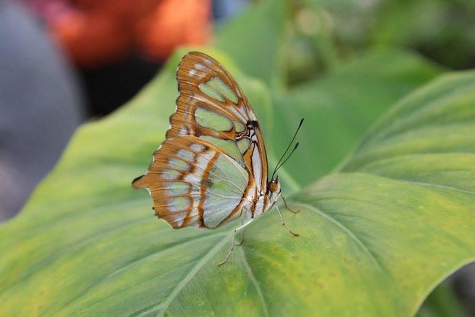 Streetwise Butterflies