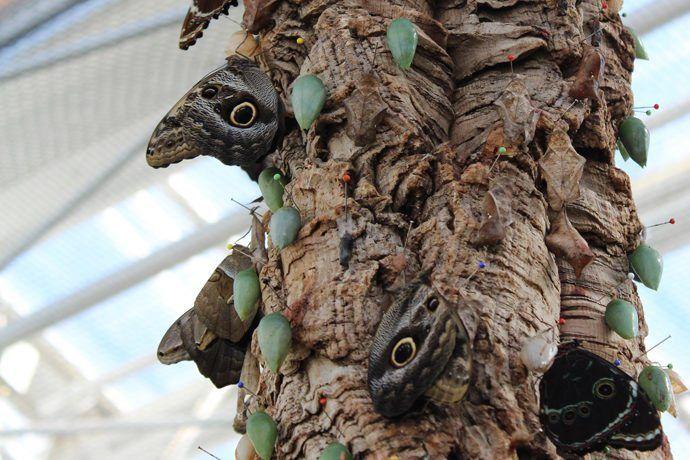 bird-heads