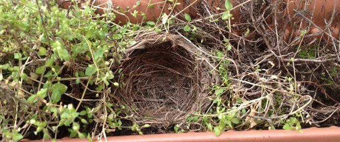 Birdy's nest